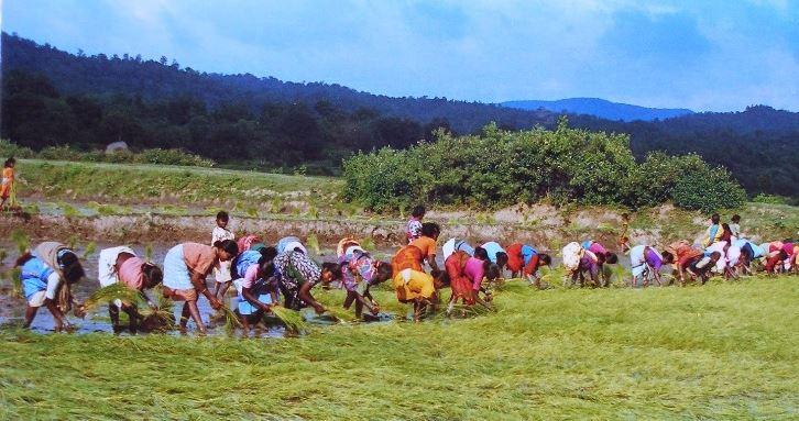 Adivasi land rights